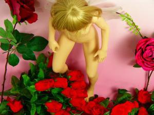 お花に飛んできた妖精